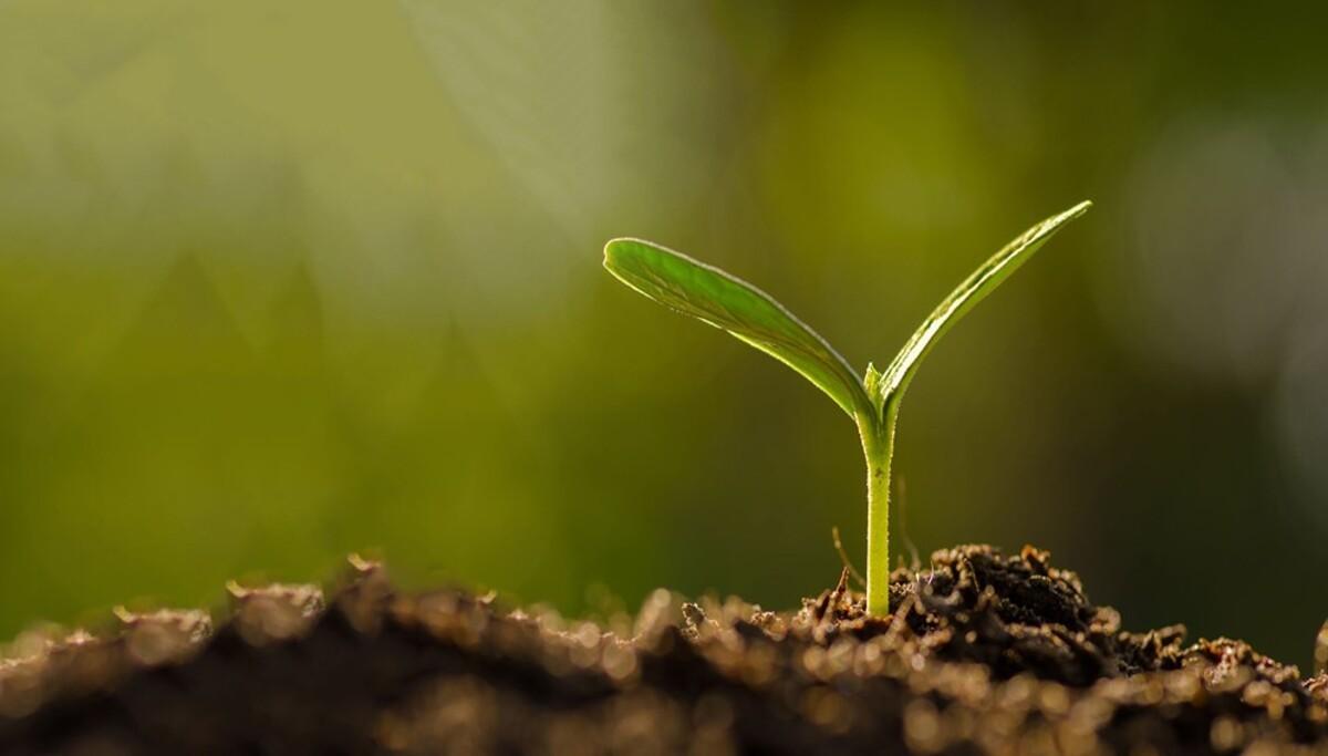 FAO : Développer les capacités dans les systèmes d'innovation agricole