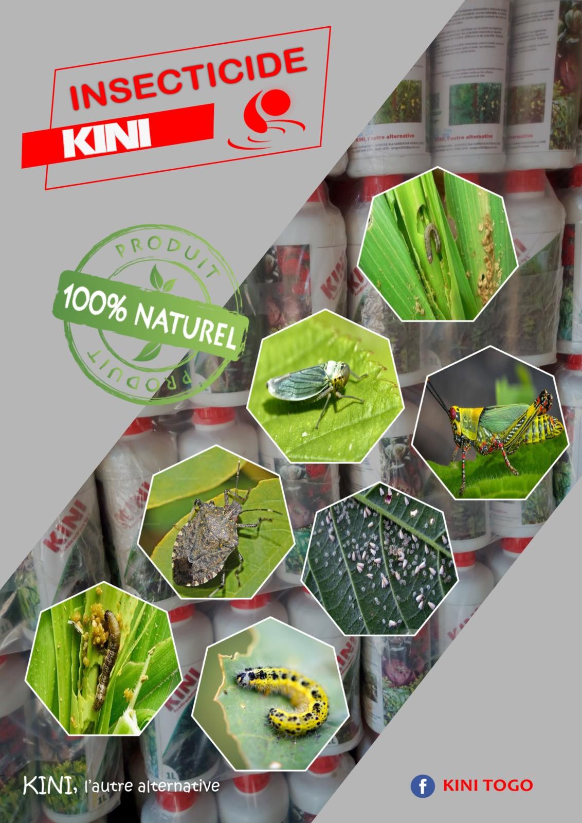 Togo : Razak Adjei change le neem en insecticide pour sauver les cultures