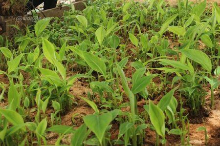 [Agriculture] Projet de renforcement des capacités des populations